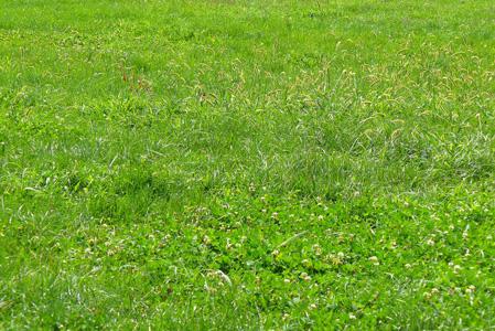 绿色草地摄影