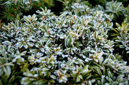 冬季植物摄影