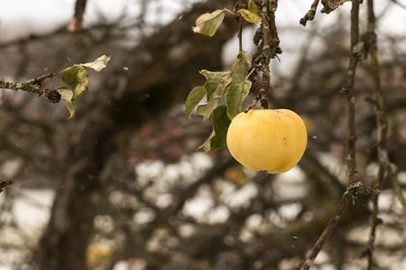 高清苹果摄影