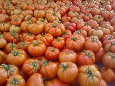 高清西红柿摄影