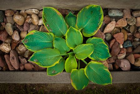 绿叶与植物摄影