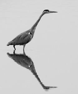 河流动物摄影