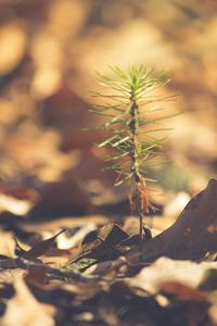 土地上的枯叶与植物