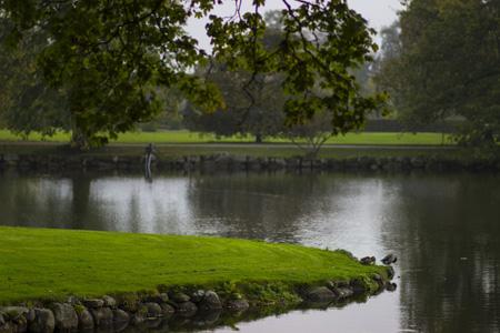 河边小树美景