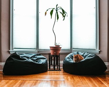 黑色沙发上的猫