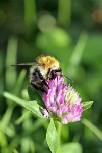 鲜花蜜蜂与绿叶