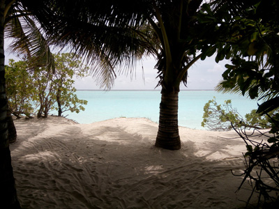 沙滩上的大树