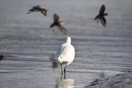 沙滩上的白鸟
