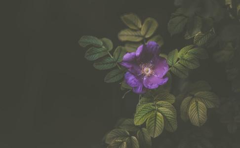 绿叶与鲜花摄影
