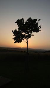 小树与日落