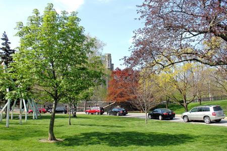 公园里的小树