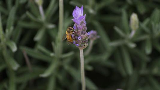 绿叶花朵与蜜蜂