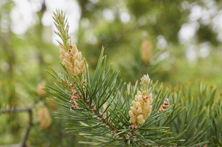 绿色树枝植物摄影