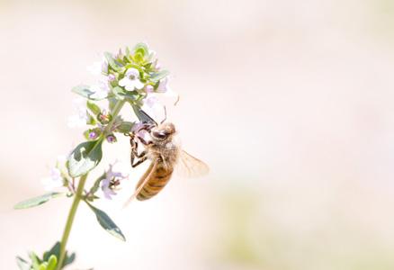 树枝上的绿叶花朵与蜜蜂