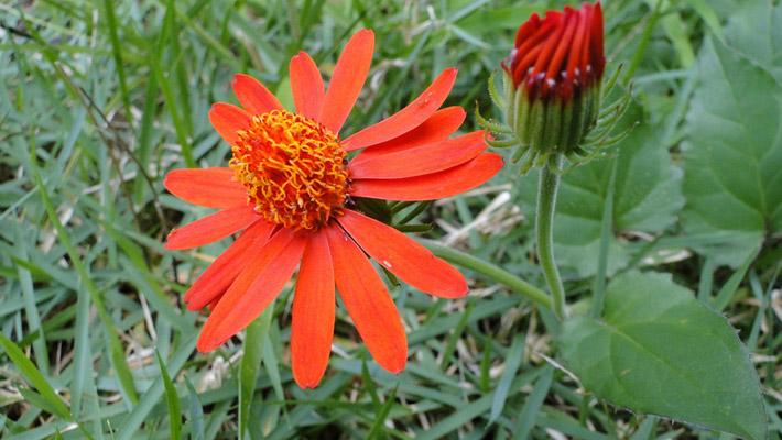 橙色花朵绿叶