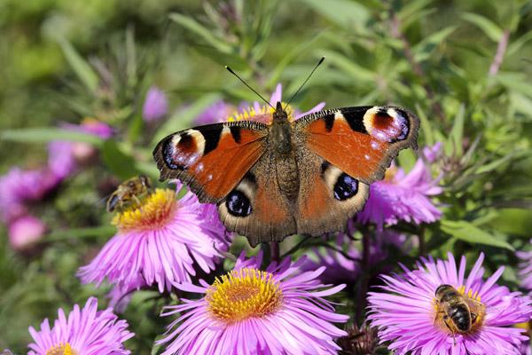 粉色花朵蜜蜂与蝴蝶