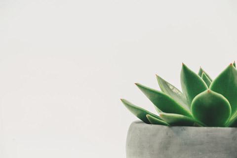 绿色盆栽植物摄影